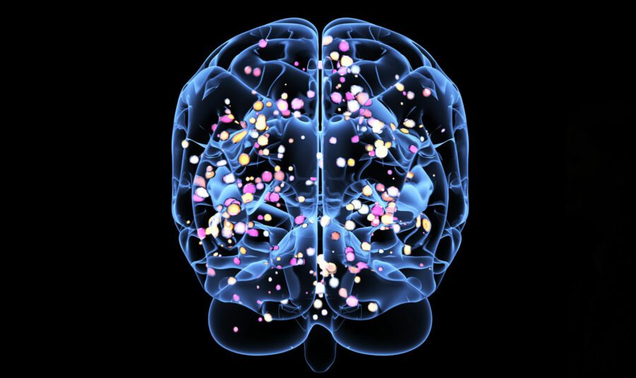 The Brain Uses Mental Shortcuts to Judge Risks and Threats